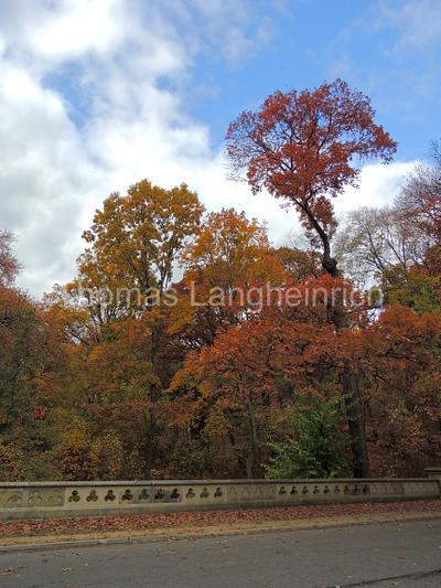 Autumnal Prospect
