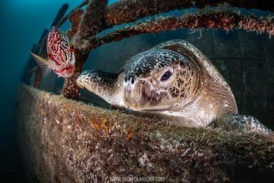 Fang Ming Wreck, La Paz, Baja California Sur, Mexico