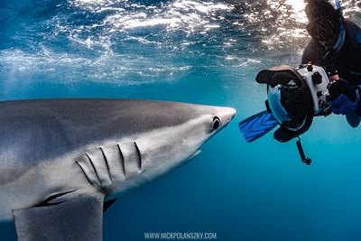 Underwater Photographer coming up close with a Blue Shark off Cabo San Lucas, Baja California Sur, Mexico