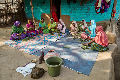 Women get together to prepare the organic 5-leaf mix which is used  as a pesticide and nutrient. The Indian names of these leaves are:  Neem, Dhatura, Aak, Beshram and Ratanjyot. The mix also includes cow dung and urine which are considered to be extremely effective and integral to organic farming.