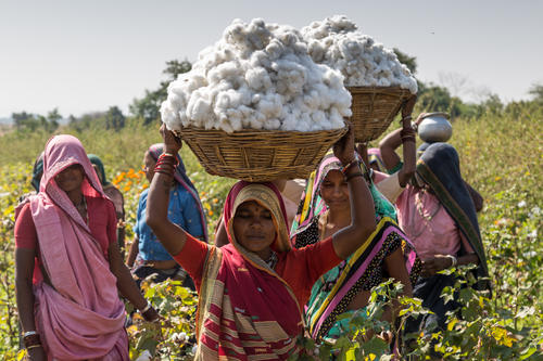 Growing and picking organic cotton has made a big difference to the health of the farmers and their families.  The use of chemical pesticides used to cause diseases and illness due to exposure to these poisons, whereas the use of organic materials has eliminated these problems, thus improving overall health and reducing medical expenses.