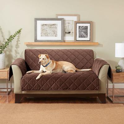Dog Blanket on Furniture