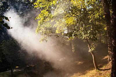 Sunshine and Smoke