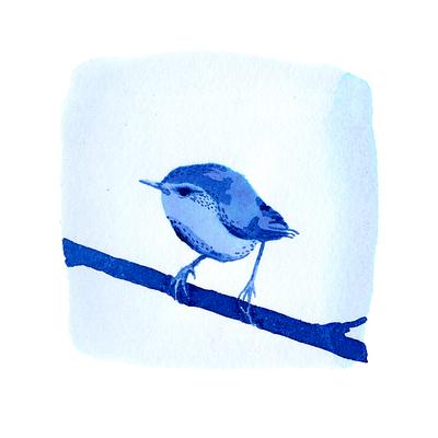 A Blue New Zealand