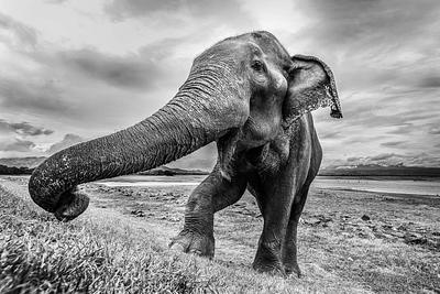 My last chance to photograph an elephant in Sri Lanka