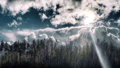 Woodland Fairytale