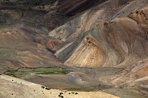 oasis, ladakh, 2013