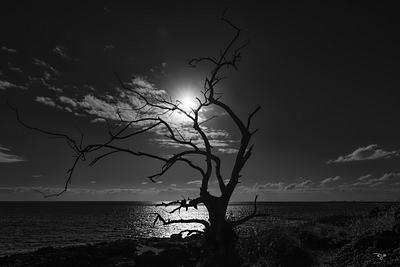"""""""Silhouette In The Sun"""""""