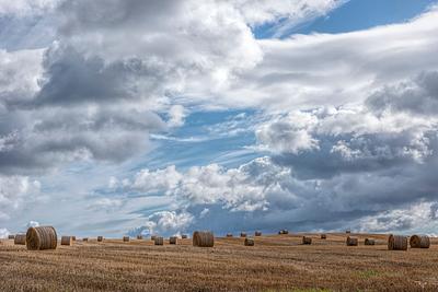 """Harvest"""