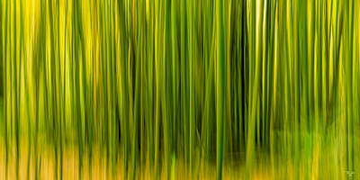 """Bamboo In Abstract"""