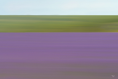 """Lavender In Motion"""