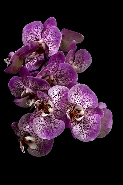 Floral Fine Art Photography
