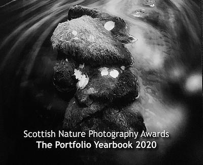 Photo in Scottish Nature Photography Awards Portfolio Yearbook, 2020