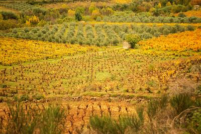 South of France - Occitania