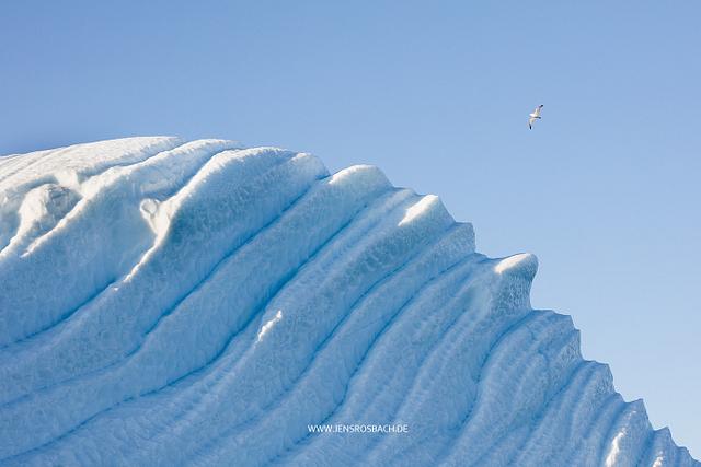 Ice Bird, Greenland
