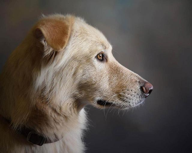 Puppy Portrait Plan