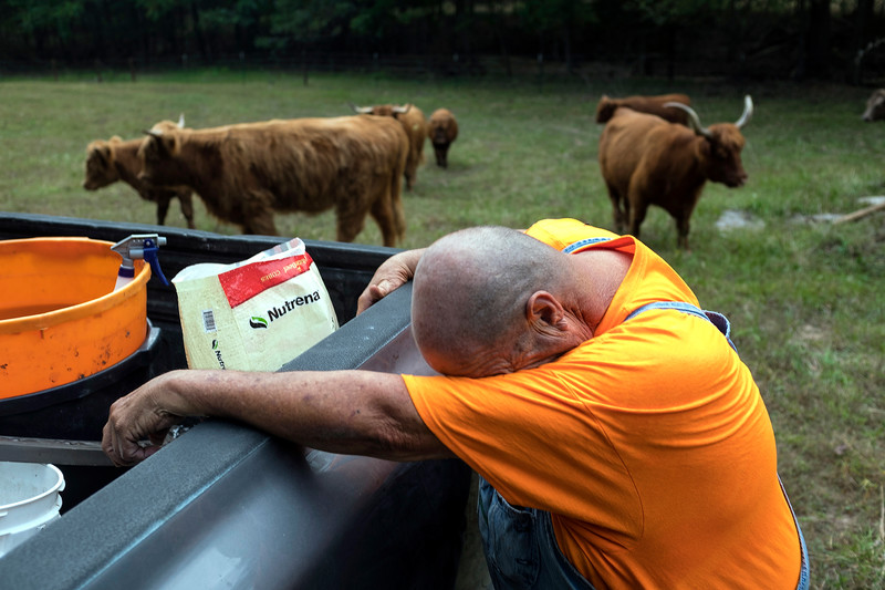 Phil cleans the sweat from his forehead after feeding his cattle, a chore he does daily after finishing his work at the recycling plant he owns in Eldon, MO.