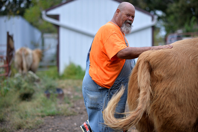 """Phil interacts with one of the forty Scottish Highland cattle that he and his wife own. Each animal has a name, and Phil treats them like pets. """"Even if the animals weren't profitable at all we would keep at least few of them. We enjoy their company."""""""