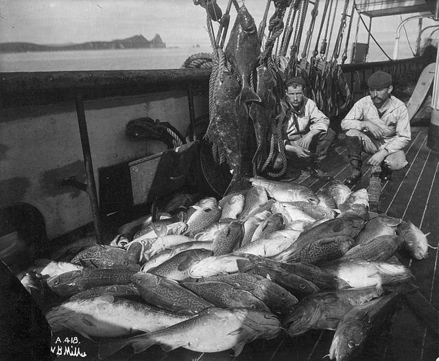 Cod ears contain a long history of warming in the Atlantic Ocean