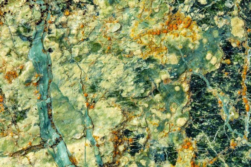 Serpentine Soliloquies