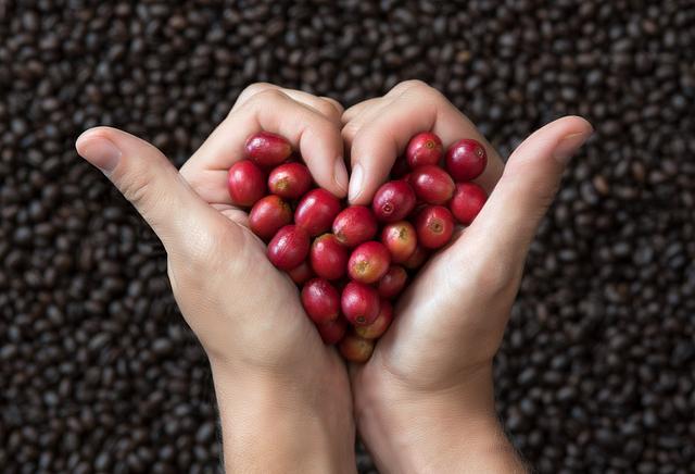 """Mill House Coffee Cherries, """"I Love Coffee"""""""