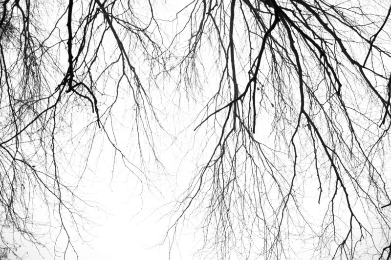 fine art photography - trees
