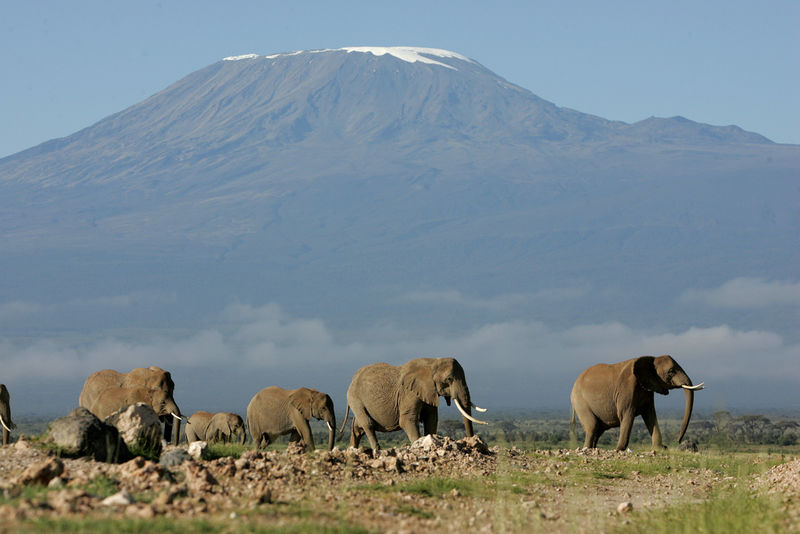 A herd of elephants walk with Mt Kilimanjaro in the background, Sunday, May 21, 2006 in the Amboseli game park in Kenya.