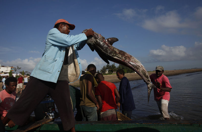 In this Wednesday, Nov. 25, 2009 picture Kenyan fishermen offload their catch in Malindi.Fishermen who fish for a living and sportsmen who catch fish for fun say they've seen a rise in fish stocks in northern Kenya and suspect the rise is due to Somali pirates who have forced commercial trawlers off the Somali coast.