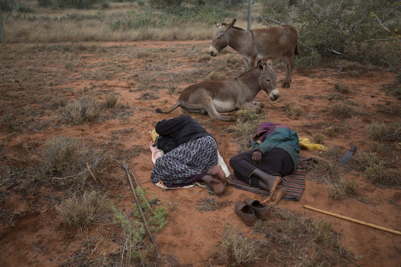 Exhausted Kenyan Somali herders sleep as they move their cattle just outside the Tsavo East game park in Kenya 9 June 2013. PHOTO/KAREL PRINSLOO