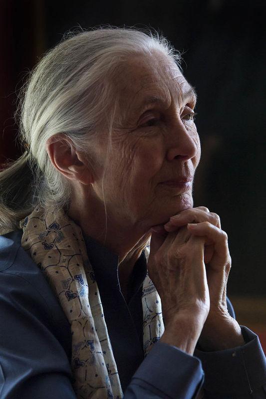 Jane Goodal