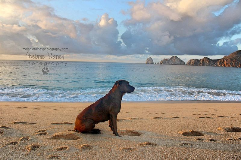 Cabo San Lucas - Stray dog