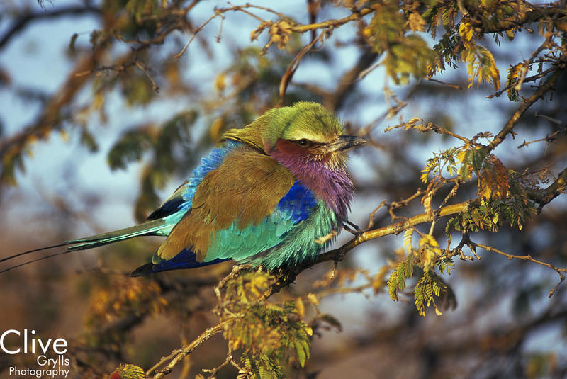 IMAGE LIBRARY AFRICA : BIRDS