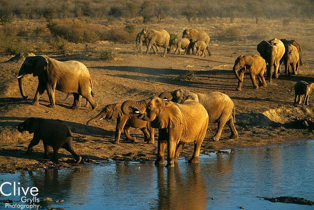 I L AFRICA : ELEPHANTS AND RHINOCEROS