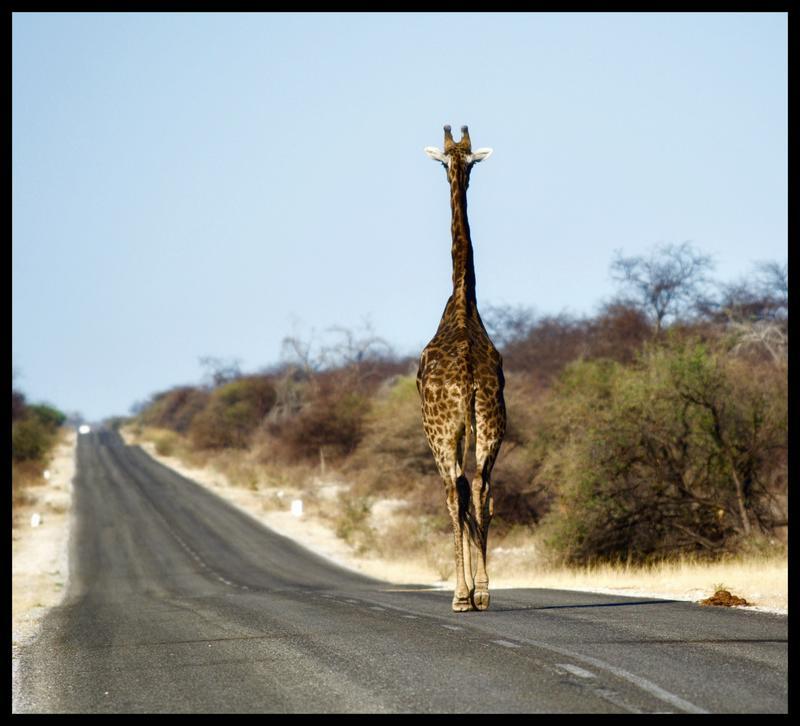 Carreteras de Namibia: información para Self Drive Safaris