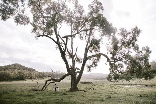 Alice + Cody | Mystwood Wollombi