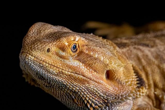 Diamond Reptiles and Supplies