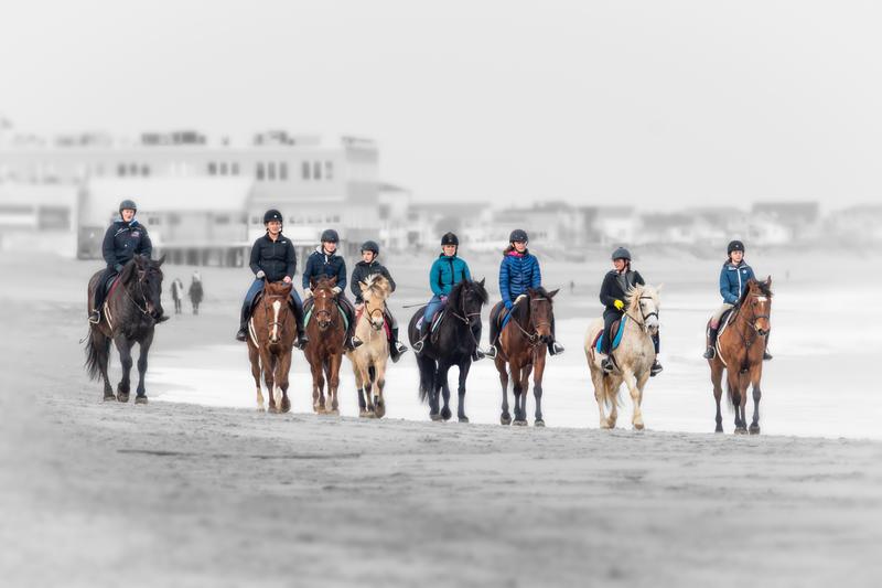 Salisbury Beach Horses 12/31/2018