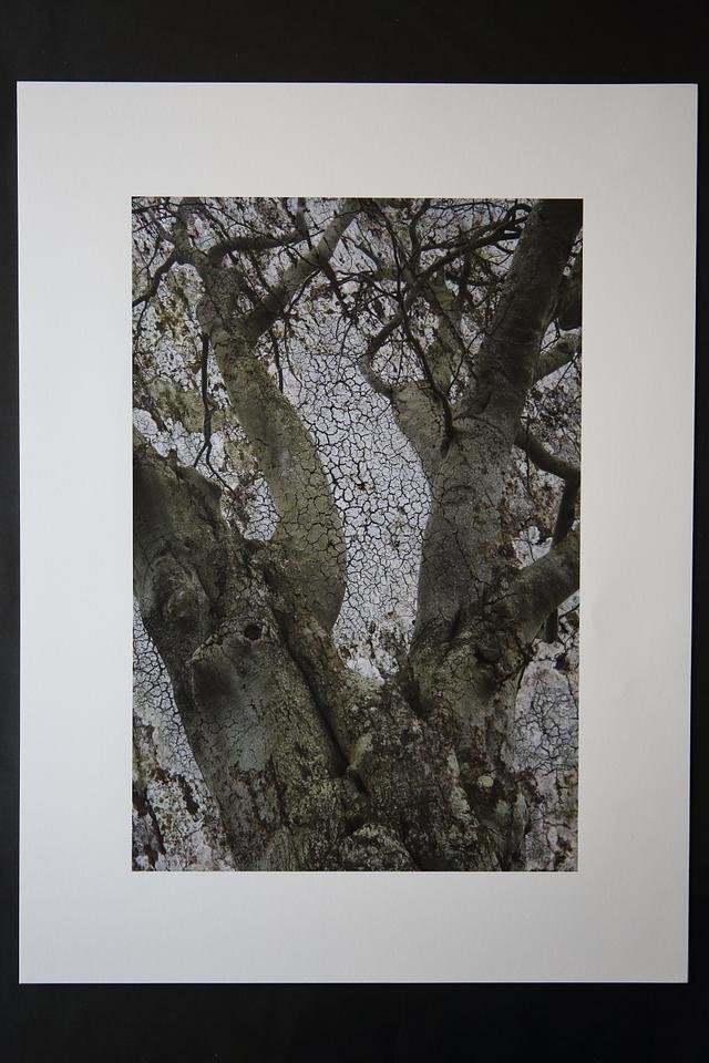 SU134422 (2017) - archival giclée print, 45.7cm x 61cm, edition of 3