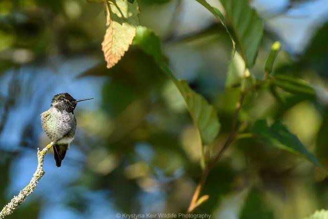 A Big World, A Small Bird