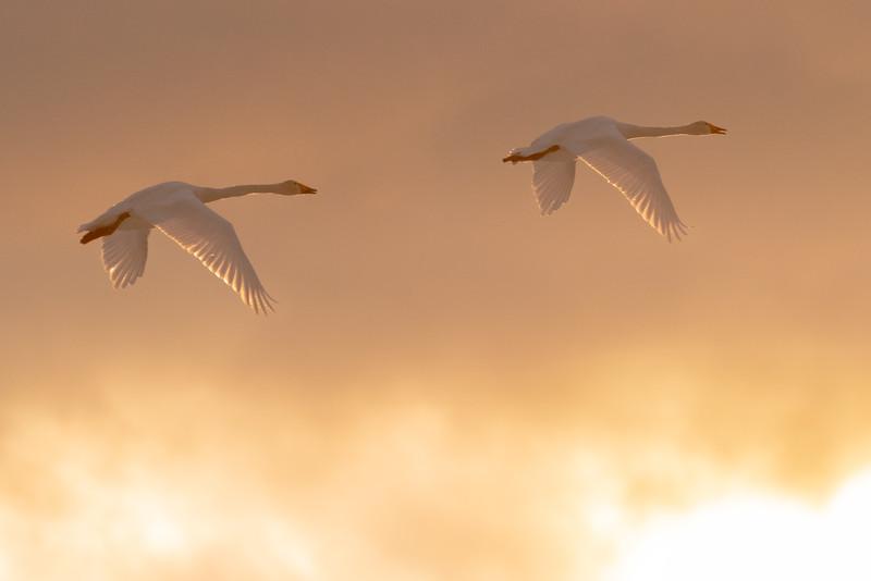 Luontokuvausta 2019: Talven loppu on kevään alku