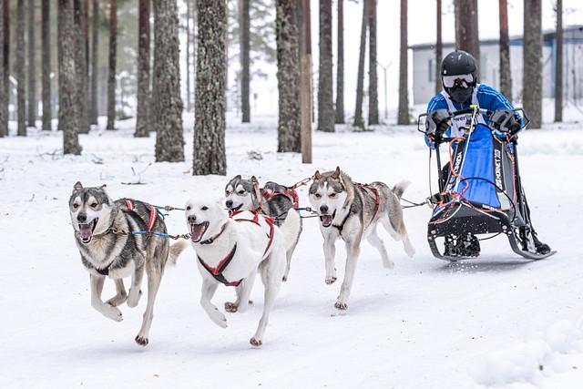 Valjakkourheilu: Jämin talvikisa 2019