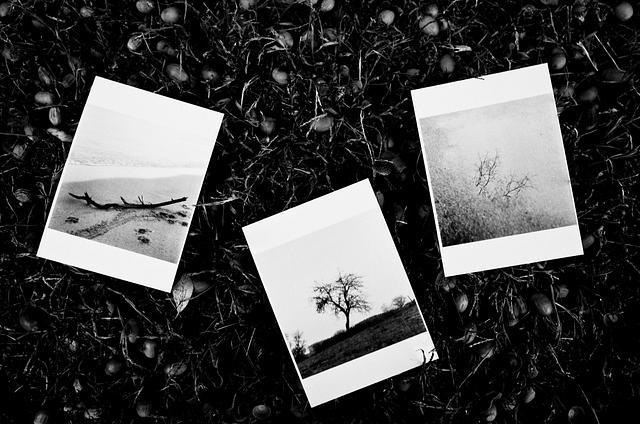 3 Fotokaarten (A6)