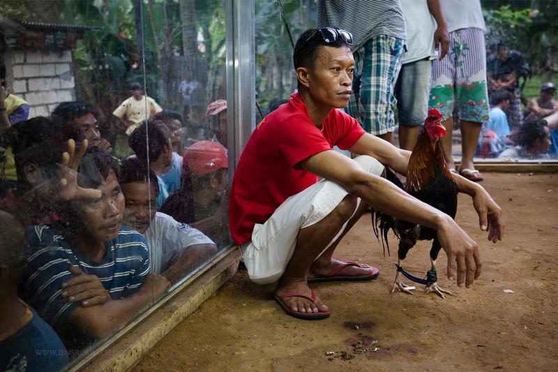 Cockfighting I, Philippines