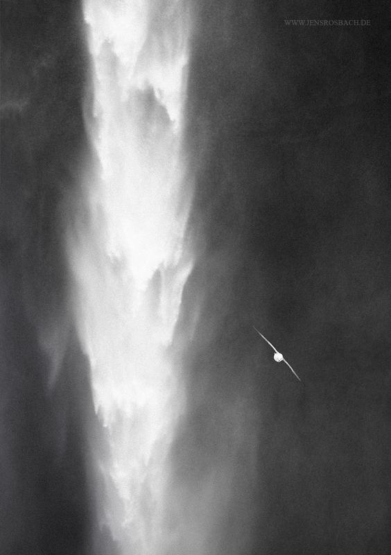 Waterfall Bird, Iceland