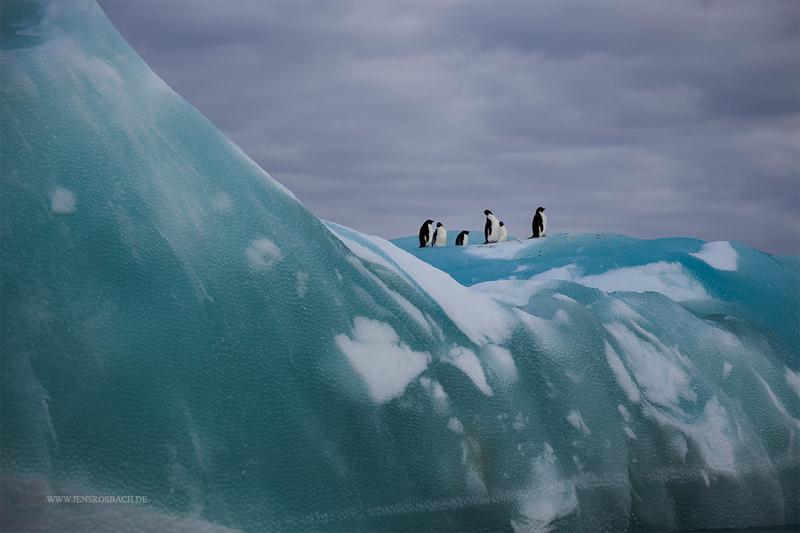 Penguin's Iceberg, Antarctica