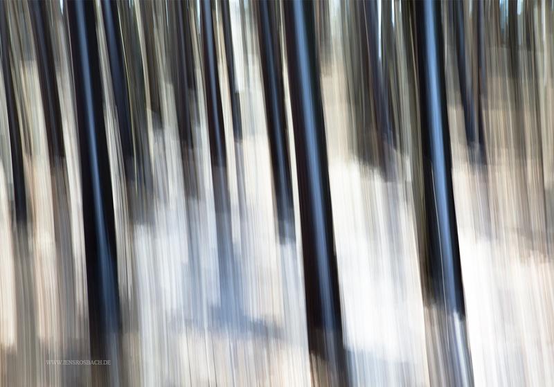Snowy Trees, Latvia