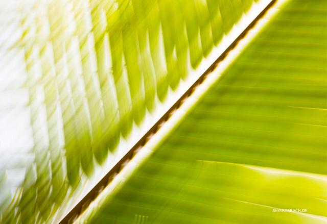 Palm Leaf I