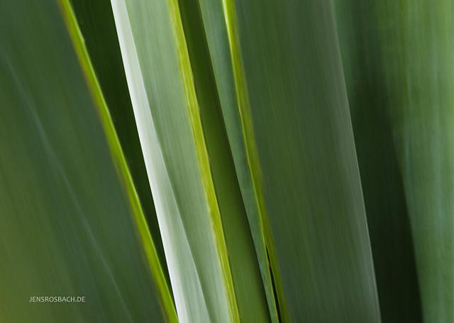 Palm Leaf IV