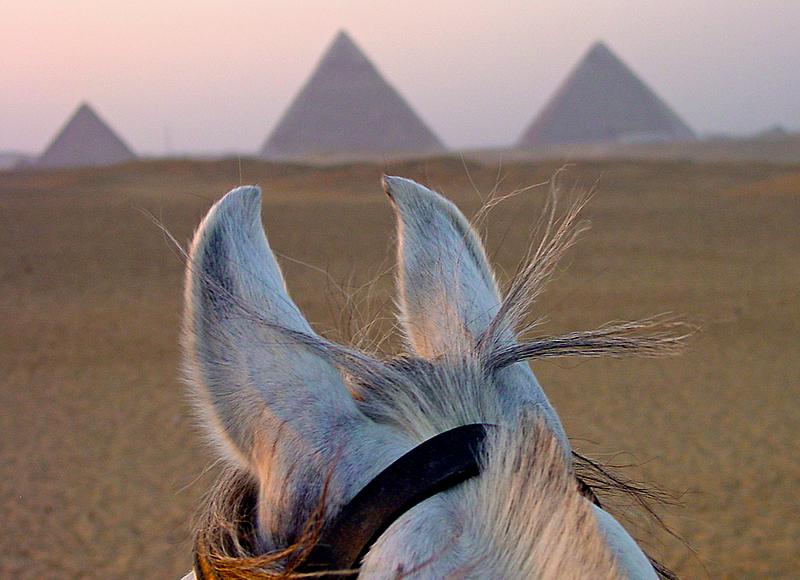 Sunset ride around the Pyramids. Giza.
