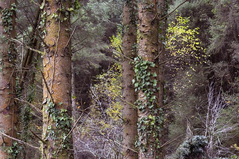 FORESTRY IN LEITRIM